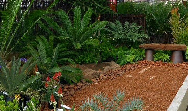 Cycad garden design a garden the home channel Home channel gardening
