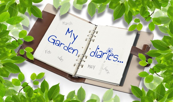 The garden diaries gardening the home channel Home channel gardening