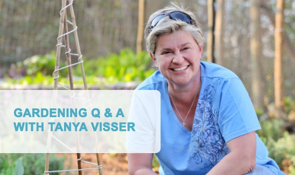 Gardening q a with tanya visser ask tanya the home channel Home channel gardening
