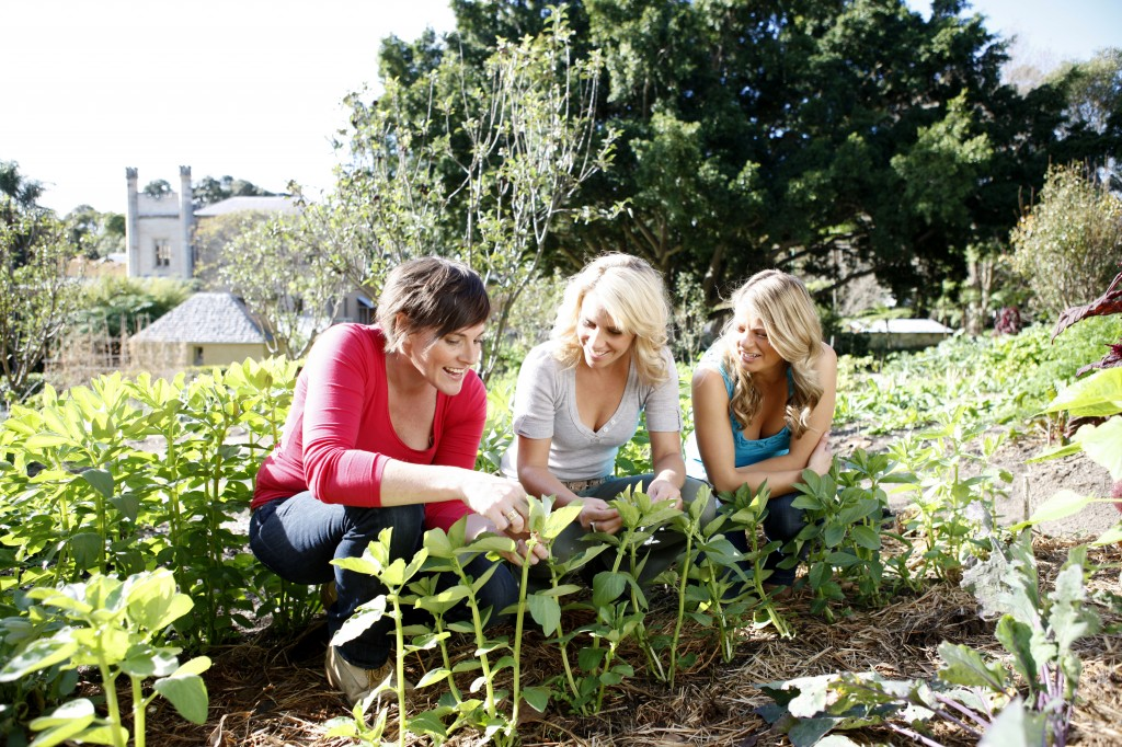 Garden angels the home channel Home channel gardening