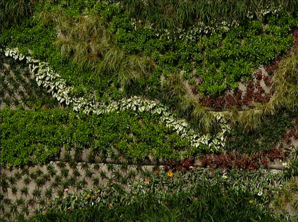Vertical garden gardening the home channel Home channel gardening