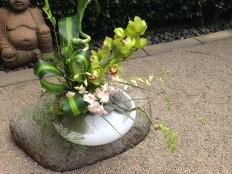 FC orchids 1
