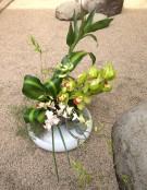 FC orchids 2